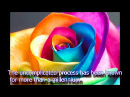 Colored Roses Rainbow Colored Rose Youtube