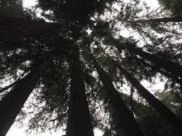 thanksgiving camping california slick haus slickhaus twitter