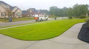 lawn care program roots turf and ornamentalroots turf and ornamental