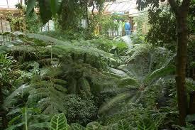 Botanic Gardens Uk File The Tropical Ravine Botanic Gardens Belfast Geograph Org