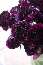 best 25 dark plum flowers ideas on pinterest plum ideas sage