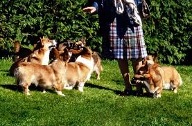 queen elizabeth dog a quick history of the royal corgis the favored dog breed of