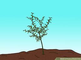 3 ways to prune a tree wikihow