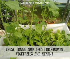 create a vegetable container garden on a budget