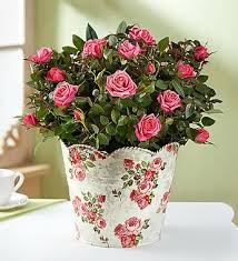 free shipping flowers fresh flowers 5and15