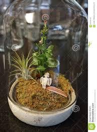 moss terrarium with angel vertical stock photo image 61412118