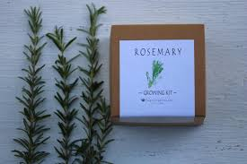 rosemary seeds garden kit herb seed growing kit dried rosemary