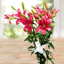pink lillies affectionate pink lilies fresh lilies flowers shopcrazzy