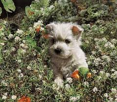 sueellen ross big puppy flowers print