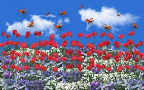 pansies clouds viola tricolor sky tulips