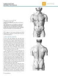 Behind The Ear Anatomy Iniciación Drawing Anatomy