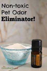 How Do You Get The Urine Smell Out Of Carpet A Simple Effective Remedy For Pet Stains On Carpets Dog Cat