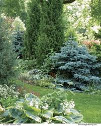 Evergreen Landscaping Ideas Designing With Dwarf Conifers Fine Gardening