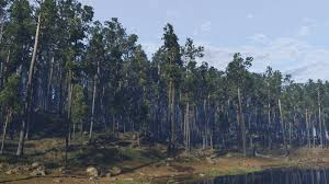 forest render pine forest