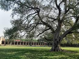 salman rashid why trees matter