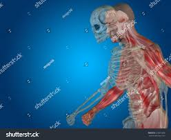 Human Body Chest Anatomy Anatomy Concept Conceptual Human Man Body Stock Illustration