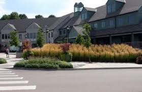 ornamental grasses great for landscape