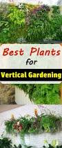 Best Plants For No Sunlight Best Plants For Vertical Garden Vertical Garden Plants Balcony