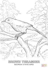 georgia state bird coloring page free printable coloring pages