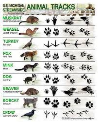 Michigan wild animals images Latest animal tracks id sheets hiking michigan jpg