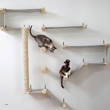 cat wall furniture cat wall climbing shelves fresh diy cat furniture lap leopards the