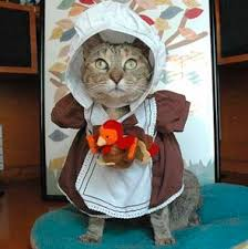 happy thanksgiving to the kitties and i ve found on