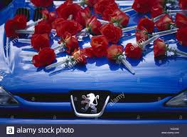 peugeot logo passenger car peugeot bonnet detail roses only editorially