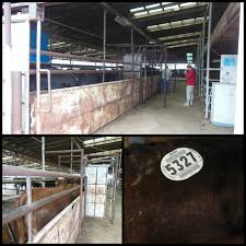 County Line Sale Barn Kim U0027s County Line Hey Hey Hey Goodbye