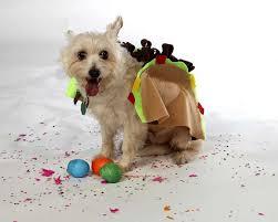 Taco Costume Easy Diy Fiesta Taco Dog Costume Always In Good Taste San