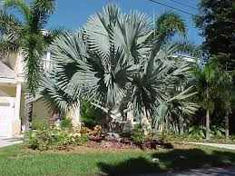 landscaping ideas with palm trees