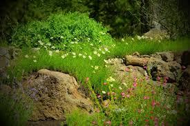 central oregon native plants carlseng designs