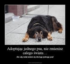 si e psa adoptując jednego psa nie zmienisz całego świata demotywatory pl