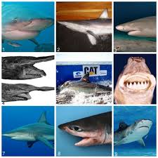 katharine the great what is she up to tracking sharks