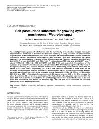 self pasteurised substrate for growing oyster mushrooms pleurotus