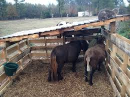horse shelter made with pallets pallet uses pinterest horse