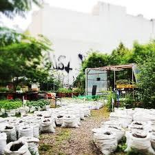 Houston Urban Gardeners - 29 best urban u0026 guerilla gardening images on pinterest urban