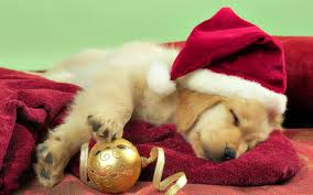 dog christmas is christmas the best time for a new dog