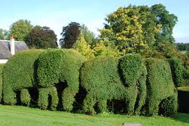 Yew Topiary - another elephant topiary hedge britannia