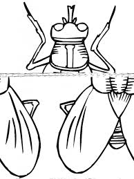 coloring pages insects aecost net aecost net