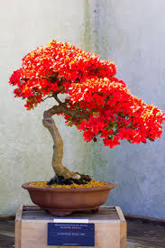Types Of Botanical Gardens by Best 25 Bonsai Tree Types Ideas On Pinterest Bonsai Types Of