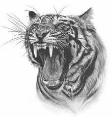how to draw tiger face roaring step by step easy for beginners