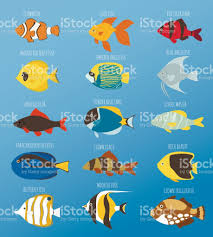 exotic tropical fish race different breed colors underwater ocean