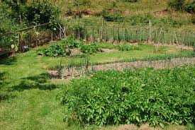 family vegetable garden vegetable garden plans u2013 grouping and rotating