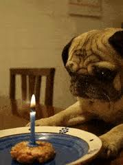 Depressed Pug Meme - happy dog sad dog gifs search find make share gfycat gifs