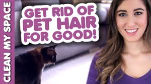 Best Way To Clean Up Hair In Bathroom Clean Pet Hair For Good How To Clean Up After Your Pets Clean