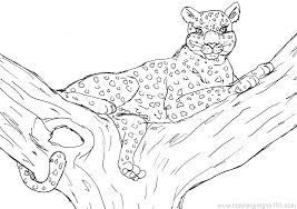 snow tiger coloring page coloring pages christmas tree snow leopard tiger on a branch page