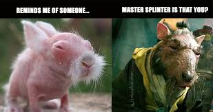 Funny Rabbit Memes - joke4fun memes baby rabbit looks like kung fu master