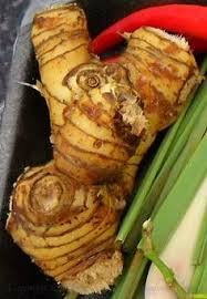 galangal cuisine 26 best galanga from alphas images on healthy