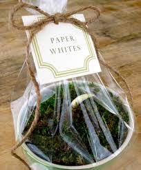 jenny steffens hobick potted paper whites hostess gift idea