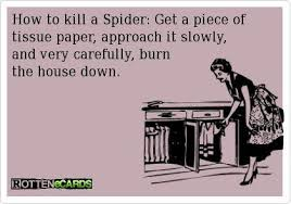 Kill Spider Meme - how to kill a spider